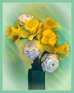 C22-valeriei-a1-Daffodils and Ranunculus - 2nd Place Plants