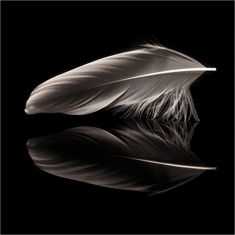 Dave Curtin - Light As A Feather - Salon BW 1st Place