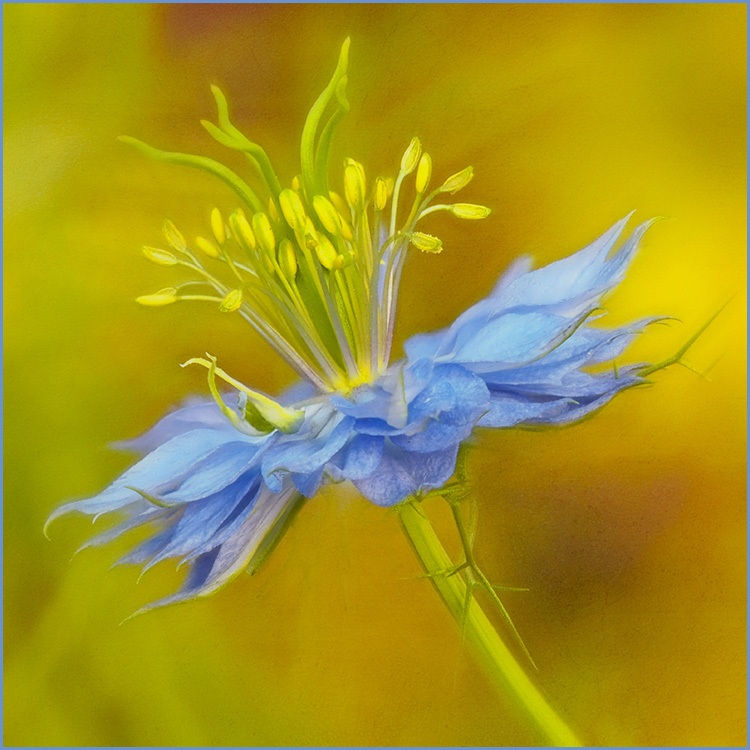 Helen Albano - Beauty In Blue - Color A IOM
